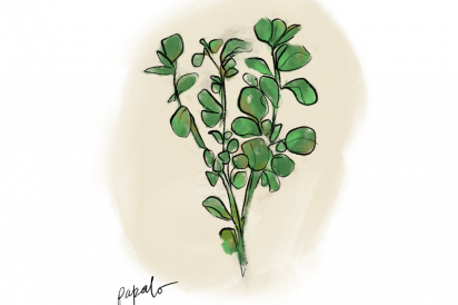 Papalo, a Mexican herb resembling watercress, used at Leti Bakery in Corona, Queens.