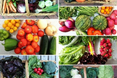 Last summers produce from Flushing CSA Queens