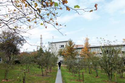 A student walks through the Newton Pippin apple orchard at the Queens College Arboretum.