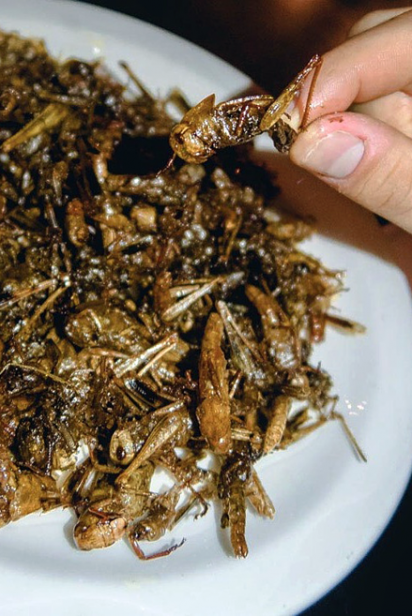 Fried grasshoppers at Playground Bar's in Jackson Heights.