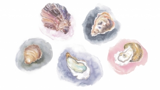 The five different types of oysters available in New York.